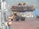 Sayward Logging_2