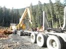 Sayward Logging_4