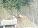 Sayward Valley Wildlife_2
