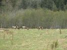 Sayward Valley Wildlife_4