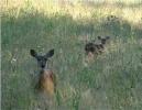 Sayward Valley Wildlife_5