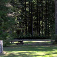 Sayward Valley Resort Tenting